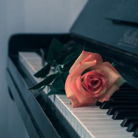 růže na starém piánu