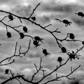 ptáci podzimu