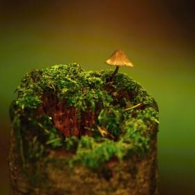 Jedna lesní.