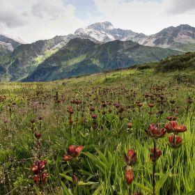 Alpská louka na Nant Borrant
