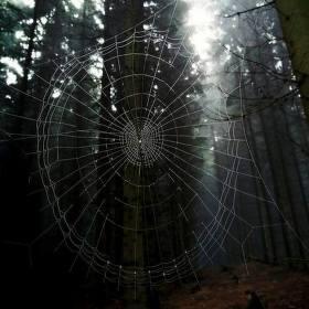 V síti pavučin.