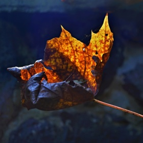 Variace podzimu