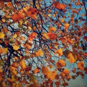 Podzim nad hlavou