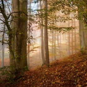 Z lesního ticha