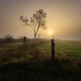Světlo v mlze