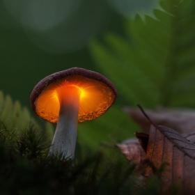 Dary lesa