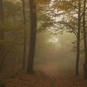 Lesní brána