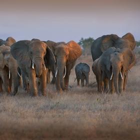 vzpomínky na Afriku (1)