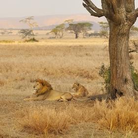 vzpomínky na Afriku (3)