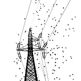 čierne na bielom: elektrický strom II