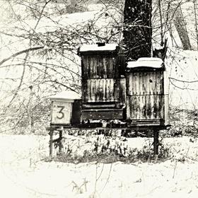 Včelí kemp