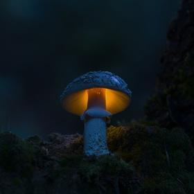 Z kouzelného lesa