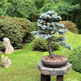 japonská zahrada v Tróji...