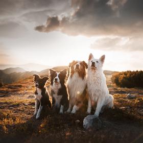Horská banda