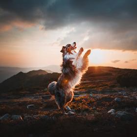 Tanec při západu slunce