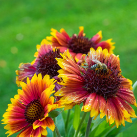 Zahradní pochůzka -  Oreston 50mm