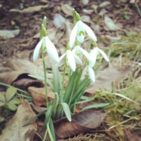 Návrat jara