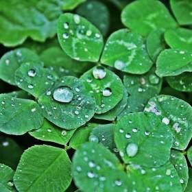 prší,prší