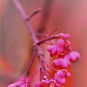 ...jen růžová to může být.... :-)
