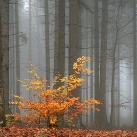 Pozdní podzim na Bukovci