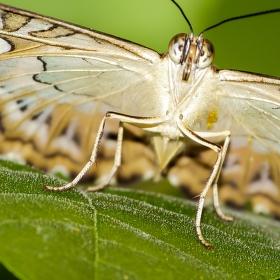 Motýlová 2