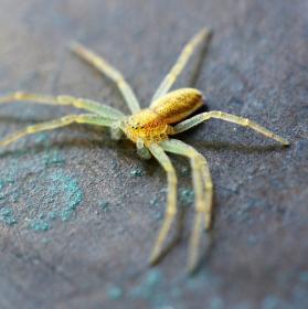 """"""" Bronzový pavouček """""""