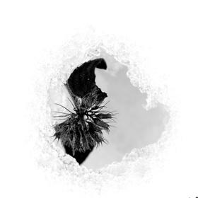 čierne na bielom: boj o prežitie