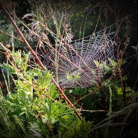 Křehká pavučinka od mistra stavitele pavoučka