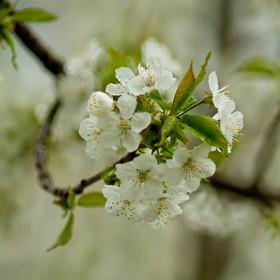 Jarní kvetení