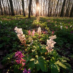 Jaro v lužním lese