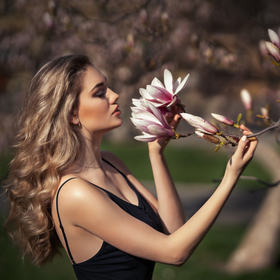 The dream of a magnificent magnolia