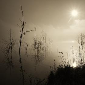 Ráno v mlze