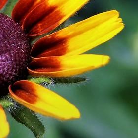 Jeden květ