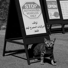 Drsný hlídač z Ománu