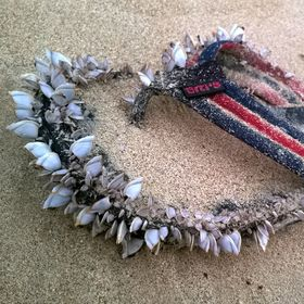 Žabka na pláži