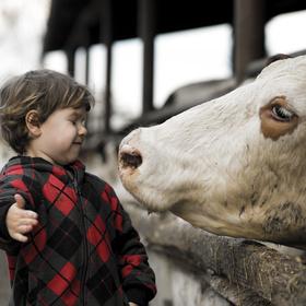 Návštěva kravína