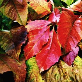 barevně veselý podzim