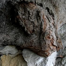 Soužití dřeva a kamene