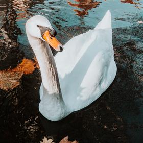 Podzimní Pottendorf