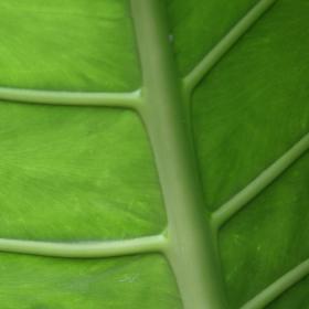 Zelená prý uklidňuje