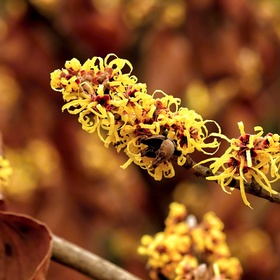 Jaro s barvami podzimu
