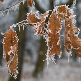 Vzpomínka na mrazivé dny