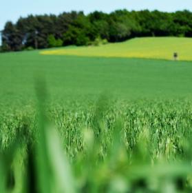 Zelená je tráva :-)
