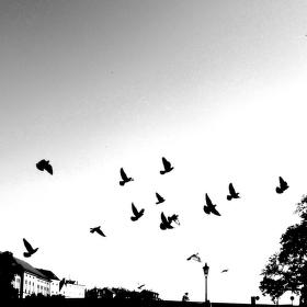 Mávnutí křídly