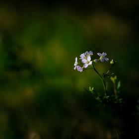 V trávě