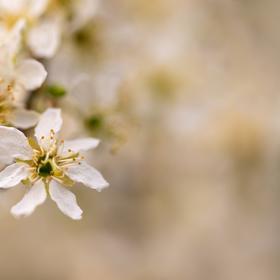 Z jara