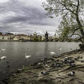 Posmutnělá krajina pražské Vltavy