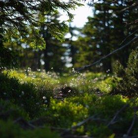 Jesenická tundra