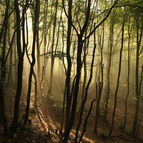 ... tančiaci les
