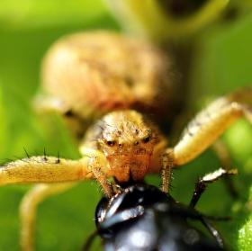 Pavoučí catering